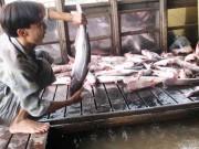 Thị trường - Tiêu dùng - Xuất khẩu cá tra phải thu mua theo danh sách của Mỹ