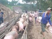 Thị trường - Tiêu dùng - Trung Quốc tăng mua, giá lợn hơi tăng trở lại