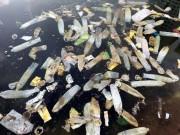 Tin tức trong ngày - Hy hữu: Bao cao su, băng vệ sinh nổi trắng hồ ở Hà Nội