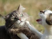 Phi thường - kỳ quặc - Người phụ nữ để 14 con mèo ăn thịt lẫn nhau ở nhà