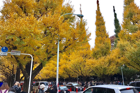 Đẹp mê say mùa lá vàng ở nhật bản - 4
