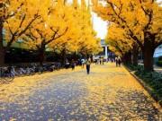 Du lịch - Đẹp mê say mùa lá vàng ở Nhật Bản