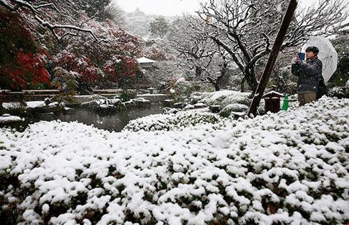 Ngắm tuyết rơi sớm tuyệt đẹp ở nhật bản - 2
