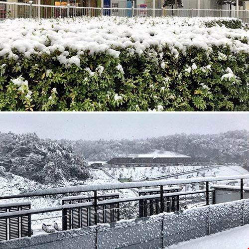 Ngắm tuyết rơi sớm tuyệt đẹp ở nhật bản - 1