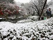 Du lịch - Ngắm tuyết rơi sớm tuyệt đẹp ở Nhật Bản