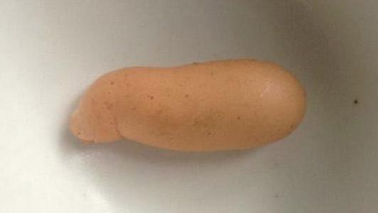Kỳ lạ quả trứng gà giống… con heo