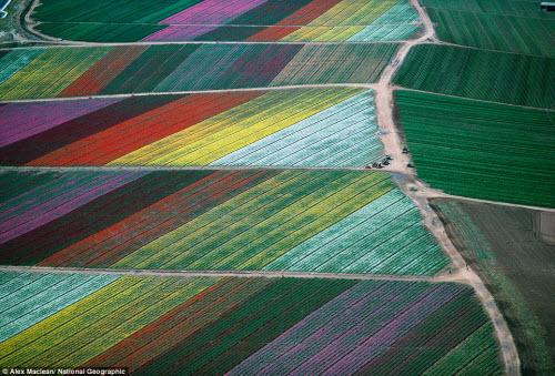 Ngắm ảnh thiên nhiên đẹp ma mị trên national geographic - 4