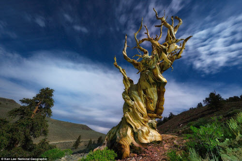 Ngắm ảnh thiên nhiên đẹp ma mị trên national geographic - 9