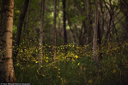 Ngắm ảnh thiên nhiên đẹp ma mị trên national geographic - 10