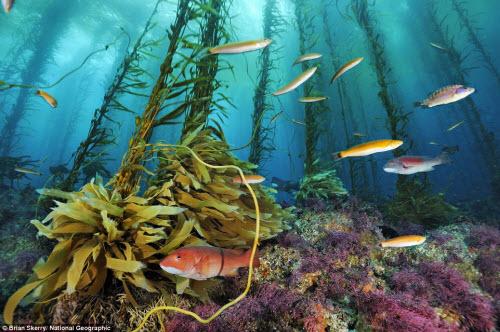 Ngắm ảnh thiên nhiên đẹp ma mị trên national geographic - 12