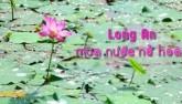 Đồng Tháp Mười mùa nước nở hoa