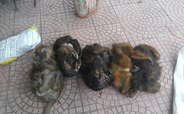 Bắt 2 đối tượng vận chuyển 7 cá thể khỉ mặt đỏ đi bán