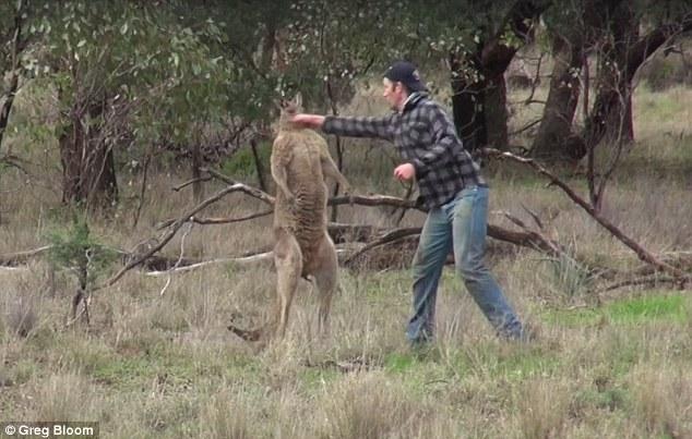 Giải cứu chó cưng