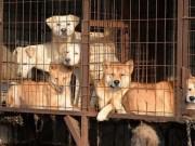 Thế giới - Khám phá thủ phủ thịt chó đầy tai tiếng ở Hàn Quốc