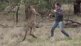 Boxing kinh điển: Đấm tối mặt Kangaroo giải cứu cún cưng