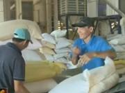 Thị trường - Tiêu dùng - Nguyên nhân xuất khẩu gạo của Việt Nam giảm kỷ lục?