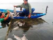 Tin tức trong ngày - Cá chết hàng loạt gần cửa biển Lăng Cô