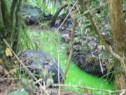 Phi thường - kỳ quặc - Anh: Suối bỗng chuyển màu xanh lá cây bí ẩn