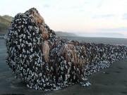 Phi thường - kỳ quặc - Vật thể khổng lồ bí ẩn dạt vào bờ biển New Zealand