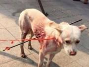 Phi thường - kỳ quặc - Bị hai mũi tên bắn xuyên người, chú chó sống sót kì diệu