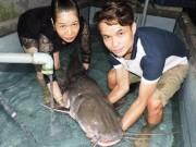 Tin tức trong ngày - Cần thủ câu được cá khủng, dài gần 2m trên sông Sêrêpốk
