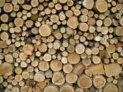 Thị trường - Tiêu dùng - Thương nhân Trung Quốc thao túng gỗ nguyên liệu Việt