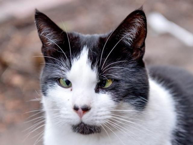 """Mèo mắt lác """"đau khổ"""" vì không ai nhận nuôi trước Giáng sinh"""