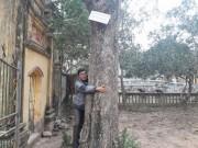 """Tin tức trong ngày - Đi tìm đại gia gỗ Đồng Kỵ chi chục tỷ mua """"cụ"""" sưa 200 tuổi ở Bắc Ninh"""
