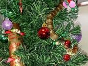 Phi thường - kỳ quặc - Kinh hãi thấy rắn hổ cực độc bò trườn trên cây Giáng sinh