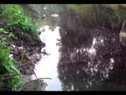 Tin tức trong ngày - Kỳ lạ dòng sông 2 màu đỏ - tím, cực thối ở Hà Nội
