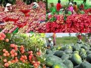 Thị trường - Tiêu dùng - Trung Quốc nhập hơn 70% rau, quả xuất khẩu của Việt Nam