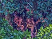 Thế giới - Lạc đường, phát hiện bộ lạc nguyên thủy ở rừng Amazon