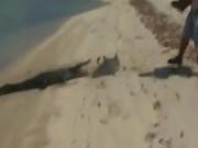 Thế giới - Úc: Cá sấu đói dính đòn đau vì cướp cá mập của ngư dân