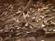 Thế giới - Anh: Phát hiện ngôi làng thời tiền sử 3.000 năm tuổi