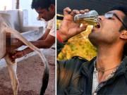 Phi thường - kỳ quặc - Người đàn ông Ấn Độ uống nước tiểu bò chữa bệnh