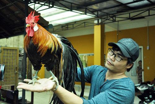 Chiêm ngưỡng gà đuôi dài 2m, giá hàng chục triệu đồng - 2