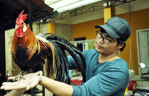 Chiêm ngưỡng gà đuôi dài 2m, giá hàng chục triệu đồng - 9