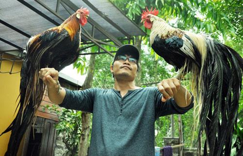 Chiêm ngưỡng gà đuôi dài 2m, giá hàng chục triệu đồng - 16