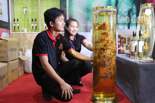 Sâm Ngọc Linh gần 100 triệu/kg vẫn đắt như tôm tươi - 1