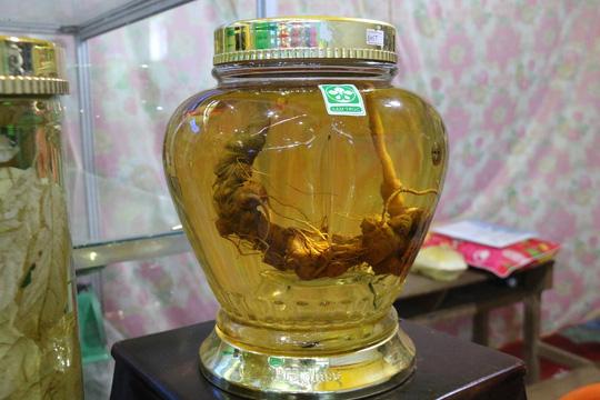 Sâm Ngọc Linh gần 100 triệu/kg vẫn đắt như tôm tươi - 6