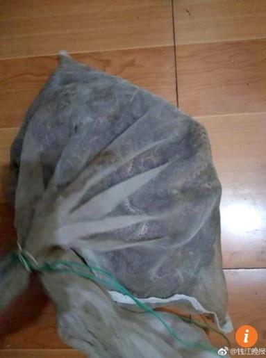 Phát hiện 50 rắn độc trong vali ở ga tàu Trung Quốc - 2