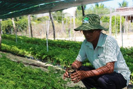 Làm giàu ở nông thôn: Trồng đinh lăng, mới bán lá, thân có 150 triệu - 1
