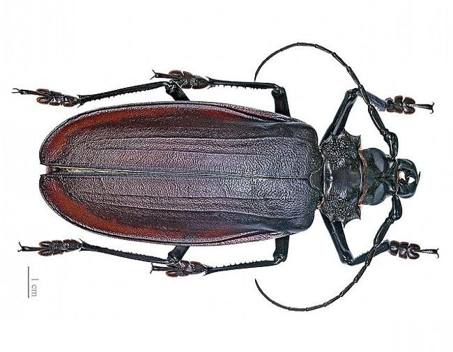 Những xứ sở của loài côn trùng khổng lồ - 7