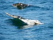 Úc: Vị trí của MH370 là bí ẩn  không thể tưởng tượng được