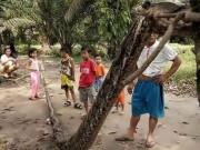 """Dân làng Indonesia  """" xử """"  xác trăn khổng lồ 7,8m thế nào?"""
