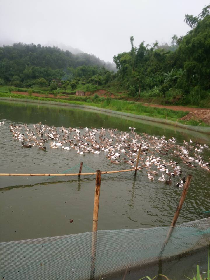Làm giàu ở nông thôn: Tỷ phú nuôi cá, vịt đi lên từ tay trắng và nợ nần - 2