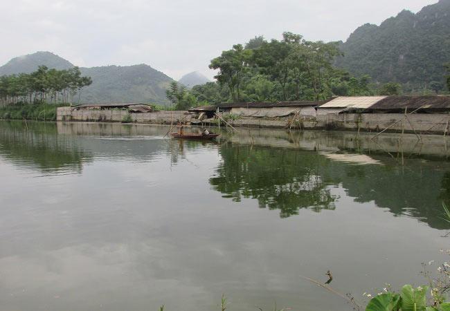Làm giàu ở nông thôn: Tỷ phú nuôi cá, vịt đi lên từ tay trắng và nợ nần - 5