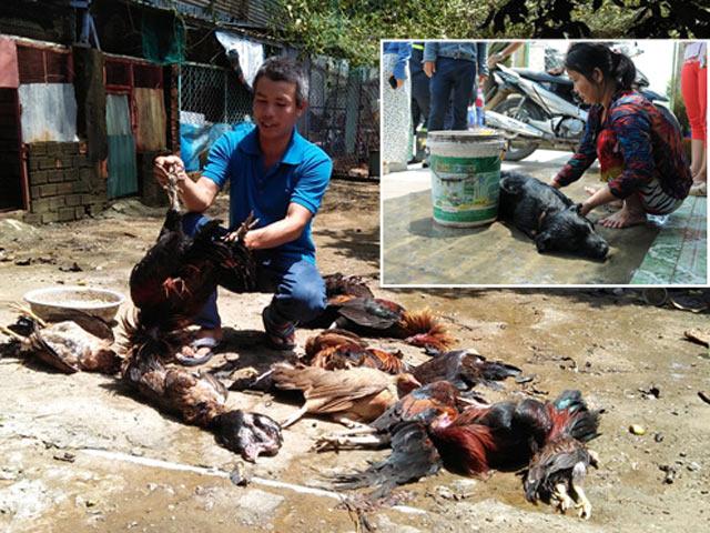 TP.HCM: Rò rỉ khí độc, 4 người nhập viện, vật nuôi chết la liệt