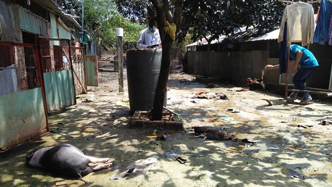 TP.HCM: Rò rỉ khí độc, 4 người nhập viện, vật nuôi chết la liệt - 5
