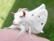 Chết vì tội... nhìn bướm trong lồng